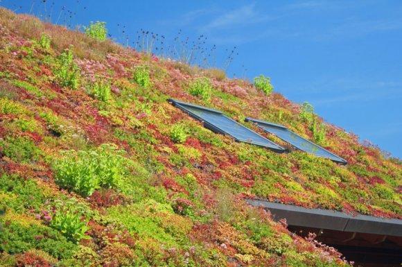 Entreprise pour étanchéité de toiture végétale à Nîmes